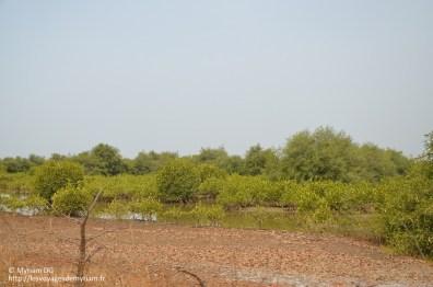 Je découvre la mangrove!!