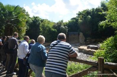 Les hippo et leur enclos immense (ironie)