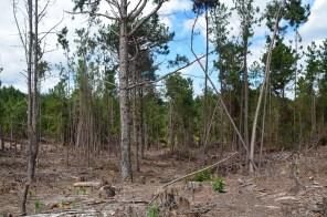 J'ai quand même eu la mauvaise surprise de voir que la forêt continue d'être coupée sans être remplacé