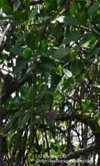 Les petites mics que l'on voit servent à la mangrove pour prendre raçine et s'étendre
