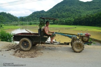Les bouses sont transportées par petit tracteur