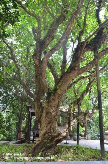 Temples de Phu Tho