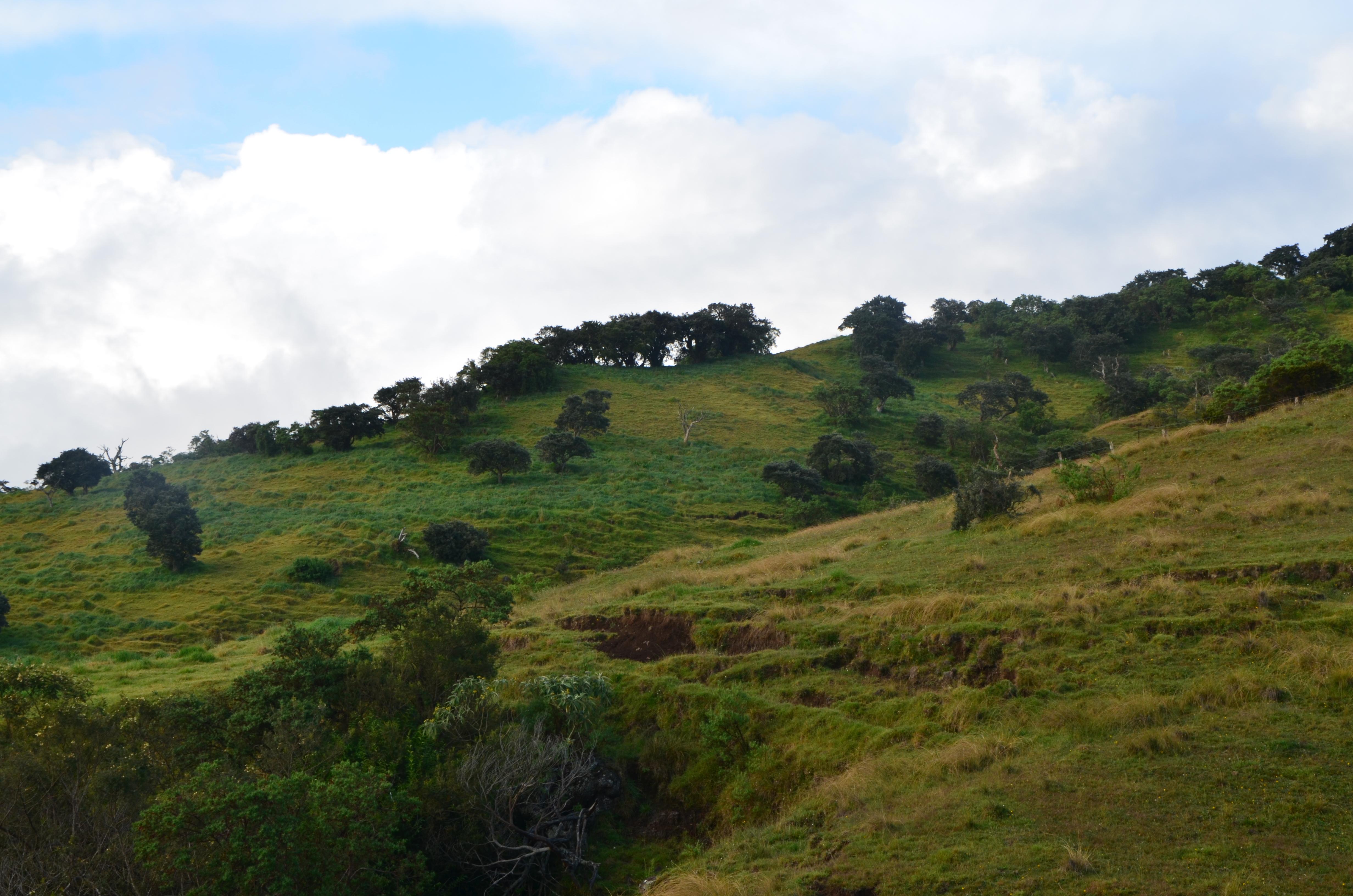 Plaines des cafres à la Réunion: des parcs, des arbres, des vaches et des colllines. Un petit coin de campagne sur une île!