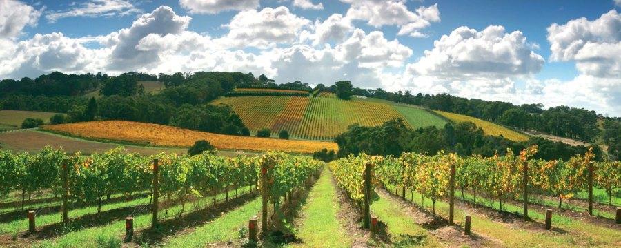 Vignobles de la Mornington Peninsula - Australie