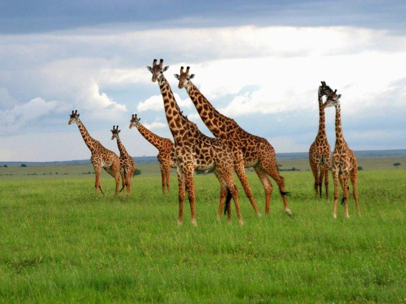 Safari (Kenya)