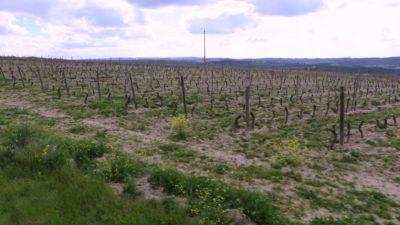 Vignobles entre Pinhel et Guarda