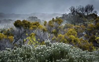 La végétation du Morne Langevin dans le brouillard