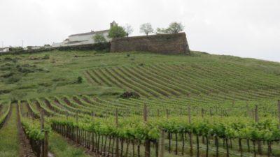 Vignobles Sur la route entre Evoramonte et Estremoz