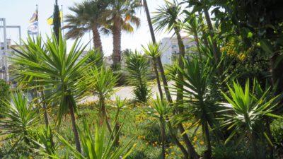Jardin de Lagos