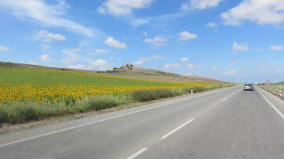 Sur la route entre Séville et Sanlucar de Barrameda