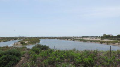 La campagne entre Cadix et Vejer de la Frontera