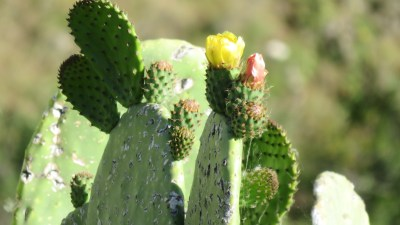 Cactus - Ronda