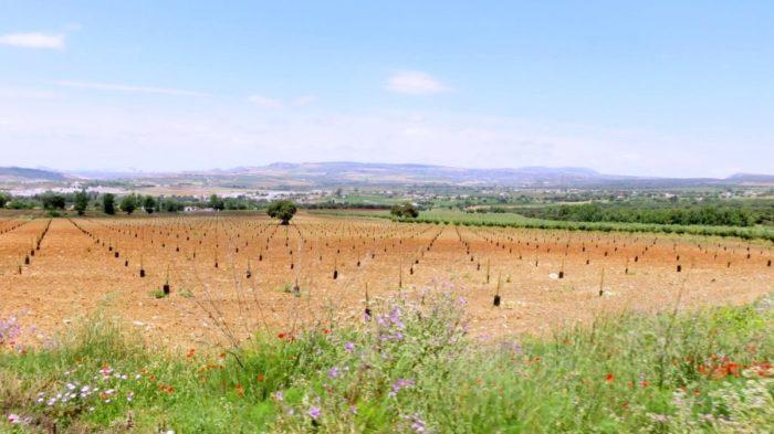 Sur la route entre Istan et Marbella
