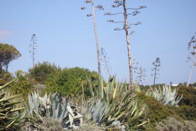Cactus et palmiers sur les falaises déchiquetées de Carvoeiro