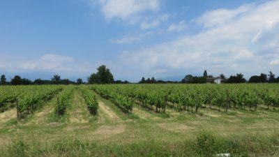 Vignobles autour du lac d'Iseo