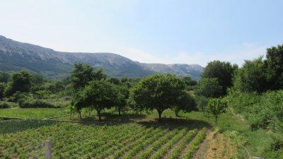 Sur la route entre Krk et Baska (Croatie)