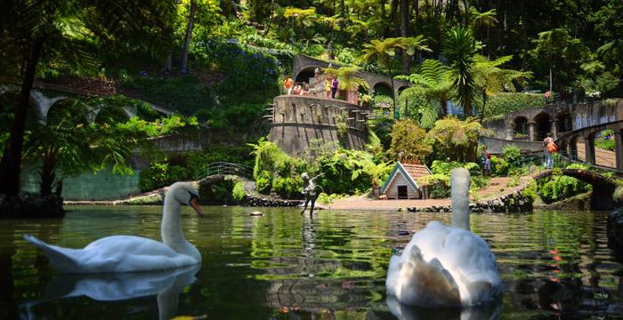 Les cygnes du jardin tropical Monte-Palace - Funchal (Madère)