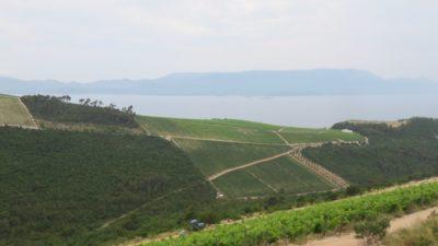 Des vignobles partout sur les côteaux - Croatie