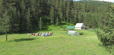 Des ruches sur le plateau du parc du Durmitor - Monténégro