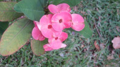 Flore au jardin de l'Etat à St Denis (Réunion)