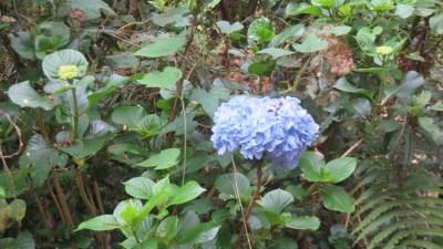Fleurs sauvages du Parc National (Réunion)