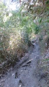 Le sentier dans Grand Sable