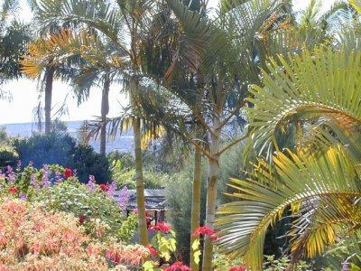 Gite les Géraniums - Bois de Nèfles (Réunion)