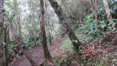 Randonnée la Roche Merveilleuse - Cilaos