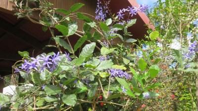 """Fleurs du jardin du gite """"Les Géraniums"""""""