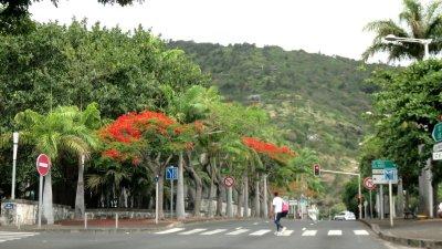 St Denis et ses flamboyants - Réunion