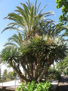 Le jardin tropical Monte Palace (Funchal - Madère)
