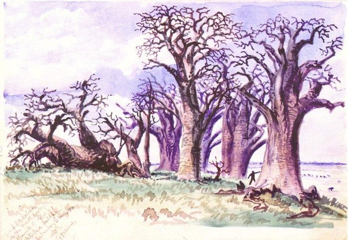 Peinture des Baobabs du Nxai Pan NP (Botswana) par Thomas Baines en 1861