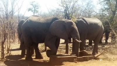 Éléphants sur la route de Victoria Falls - Zimbabwe