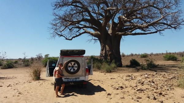 Baobab au parc national de Chobe - Botswana