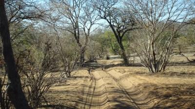 La piste sableuse du Parc National de Chobe - Botswana