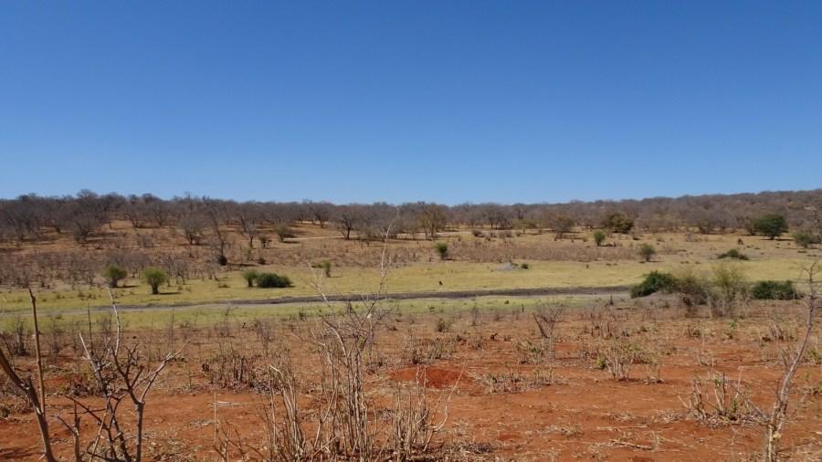 Paysage du parc national de Chobe - Botswana