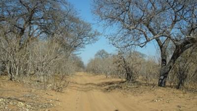 Sur la piste entre Kachekau et Goha Gate - Botswana