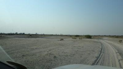 Sur la piste de la Réserve de Moremi (Botswana)