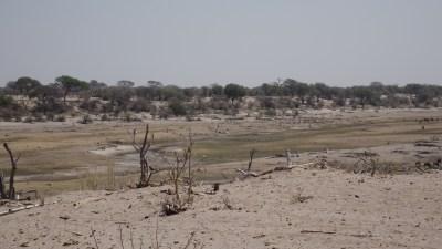 Panorama de la Rivière Boteti - Makgadikgadi NP (Botswana)