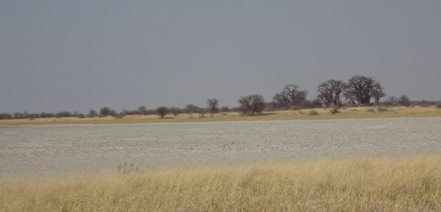 Les pans et baobabs - Nxai Pan NP (Botswana)