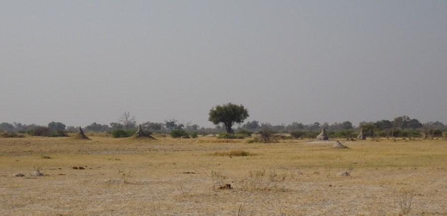 Termitières - Réserve de Moremi (Botswana)