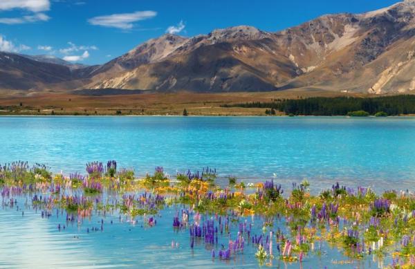 Le lac Tekapo (ïle du Sud)