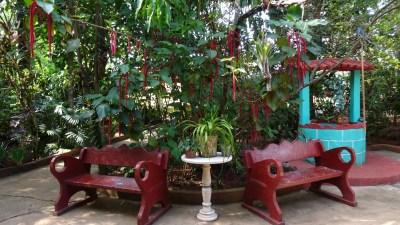 Au jardin botanique de Vinales - Cuba