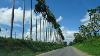 Rangée de palmiers dans la vallée de Vinales - Cuba