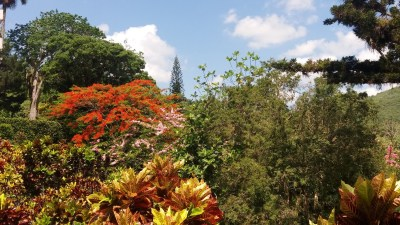 Au jardin botanique Orquideario de Soroa - Cuba