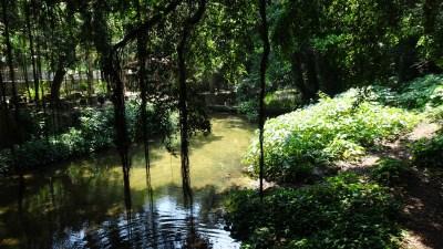 La rivière Manantiales - Soroa (Cuba)