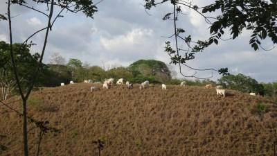Balade à Tarcoles - Costa Rica