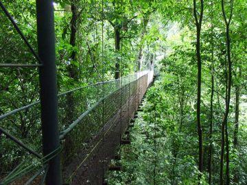 Passerelle dans la forêt tropicale humide du parc du volcan Tenorio - Costa Rica