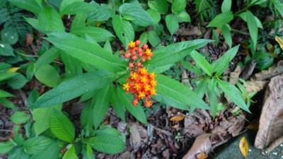 Fleurs tropicales du parc Arenal - Costa Rica