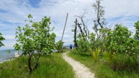 Un sentier en bord de mer du parc de Cahuita - Costa Rica